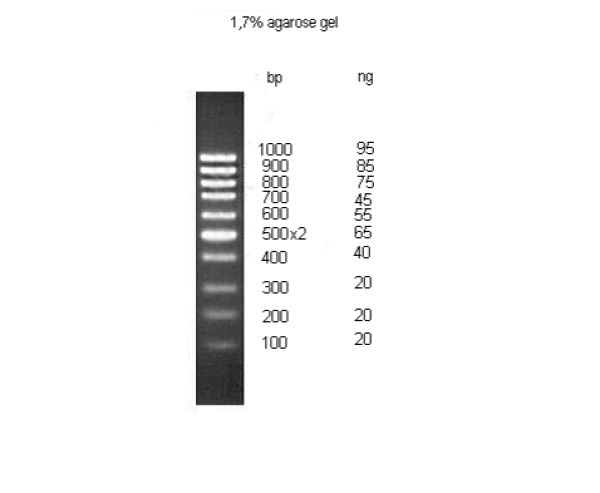 ДНК маркер молекулярного веса, M100bp